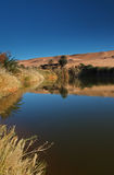 Oasis desert Stock Image