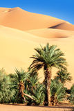 Oasis in desert Royalty Free Stock Photography