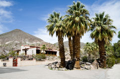 Oasis in the Desert. Five palm trees at the entrance into Scottys's Castle in Death Valley, CA Stock Photos