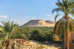 Oasis in Desert Royalty Free Stock Image