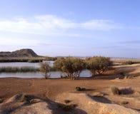 Oasis in the desert stock photos