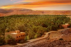 Oasis in the desert against the background of the sunset. Africa, Morocco.  Royalty Free Stock Photography