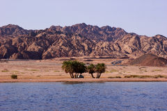 Oasis on the desert coast Stock Photography