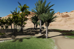 Oasis in the desert Stock Photography