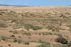 Oasis in the Desert Gobi Royalty Free Stock Photo