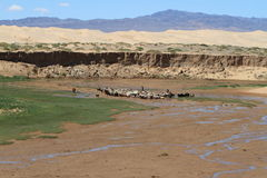 Oasis in the Desert Gobi Stock Image