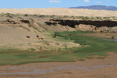 Oasis in the Desert Gobi Royalty Free Stock Images