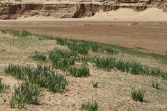Oasis in the Desert Gobi Stock Photography