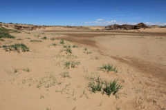 Oasis in the Desert Gobi Royalty Free Stock Image