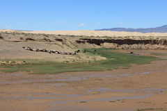 Oasis in the Desert Gobi Stock Photos