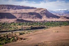 Oasis in the desert. Green oasis near Ait Benhaddou Stock Photography
