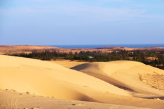 Oasis in desert. Landscape under bluy sky at sunny day Royalty Free Stock Image