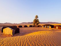 Oasis on the desert, Morocco. Oasis and a camp on Zagora desert in Morocco, Africa Royalty Free Stock Images