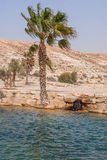 Oasis in the Desert Negev. Oasis in the Desert ,lake and palm trees against the blue sky Royalty Free Stock Images