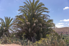 Oasis in the desert. Palm trees in an oasis in the desert of Morocco Stock Photos
