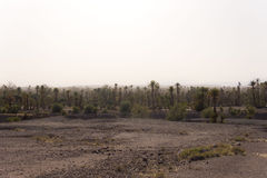 Oasis in the desert Royalty Free Stock Photography