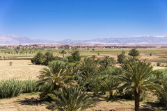 Oasis in the desert. Palm trees in an oasis in the desert of Morocco Royalty Free Stock Photos
