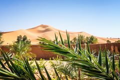 Oasis in the desert royalty free stock photo