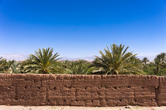 Oasis in the desert. Sand wall and palm trees in an oasis in the desert of Morocco Stock Photos