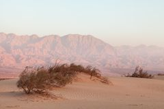 Oasis in the desert at sunset Stock Photos