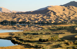 Oasis in desert. Oasis in a desert which is located in west China. It is a paradise for human and animals in desert Royalty Free Stock Photo