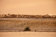 Oasis du Sahara de désert sur le coucher du soleil, Egypte Images stock