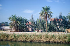 Oasis in Egypt Royalty Free Stock Images