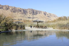 Oasis Ein Fashkha, oasis de la reserva natural de Einot Tzukim en la Tierra Santa Imagenes de archivo