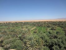 the oasis of elrrachidia in morocco stock images