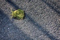 Oasis en asphalte photographie stock libre de droits