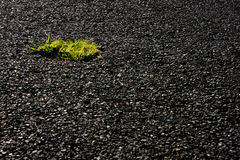 Oasis en asphalte photo stock