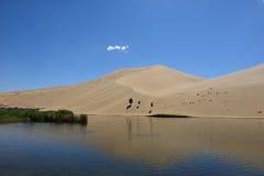 Oasis en desierto Fotos de archivo libres de regalías