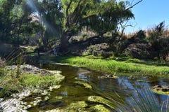 Oasis en el semi-arido australiano Victoria, Australia fotografía de archivo