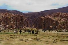 Oasis en la reserva nacional andina de Eduardo Fotografía de archivo libre de regalías