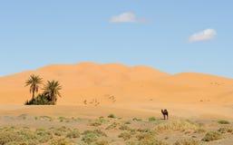 Oasis en Marruecos Foto de archivo libre de regalías