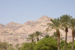 Oasis en Negev foto de archivo libre de regalías