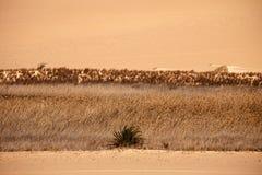 Oasis en puesta del sol, Egipto de Sáhara del desierto Imagenes de archivo