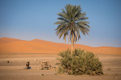 Oasis in Hassilabied, Erg Chebbi, Moroco Stock Images