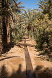Oasis in Hassilabied, Erg Chebbi, Moroco Royalty Free Stock Image