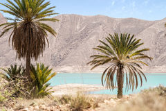 Oasis in hassilabied, morocco stock images