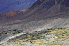 Oasis Himalayan Fotos de archivo