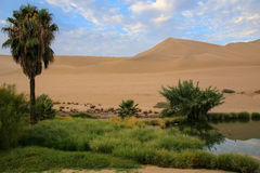 Oasis of Huacachina, Ica region, Peru. Royalty Free Stock Photography