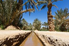 Oasis and Palm trees in the middle of the desert, Morocco stock photography