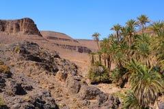 Oasis idílico en Sahara Desert, Marocco, Uarzazat Foto de archivo libre de regalías
