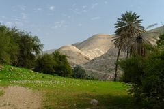 Oasis in Judean Desert at Wadi Qelt in spring Stock Image