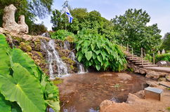 Oasis in a kibbutz in Israel. A wide-angle view of an oasis of waterfall, pond, and Elephant Ear plants in a kibbutz in Northern Israel with the Israel flag in Stock Images