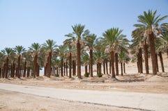 Oasis, mar muerto, Ein Gedi Foto de archivo libre de regalías