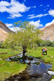 Oasis in the Markha Valley. While trekking the Markha Valley in Ladakh, India, I've stumbled on this little lovely oasis. A place where donkeys and horses can Royalty Free Stock Images