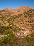 An oasis in the midst of the mountains with a river Royalty Free Stock Photo