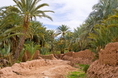 Oasis in Morocco Stock Photography